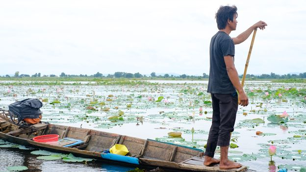 Le Cambodge et les secrets du lotus