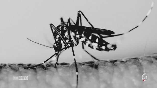 Le virus Zika n'est plus une urgence de santé publique de portée mondiale selon l'OMS [RTS]