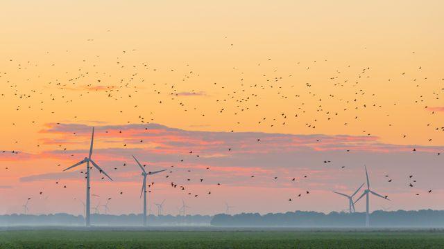 Les éoliennes et les oiseaux se partagent le ciel. Naj Fotolia [Naj - Fotolia]