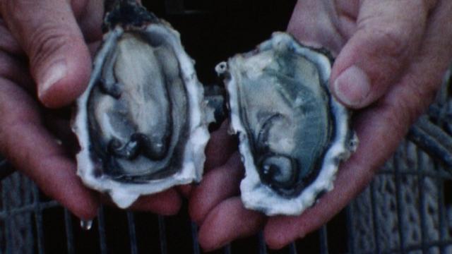 A nous les belles huîtres! [RTS]
