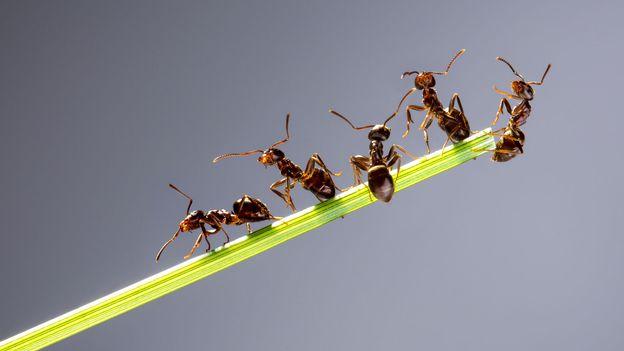 Les sociétés animales : les fourmis 2/5