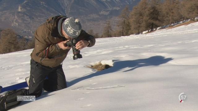Un passionné répertorie les traces d'animaux dans la neige [RTS]
