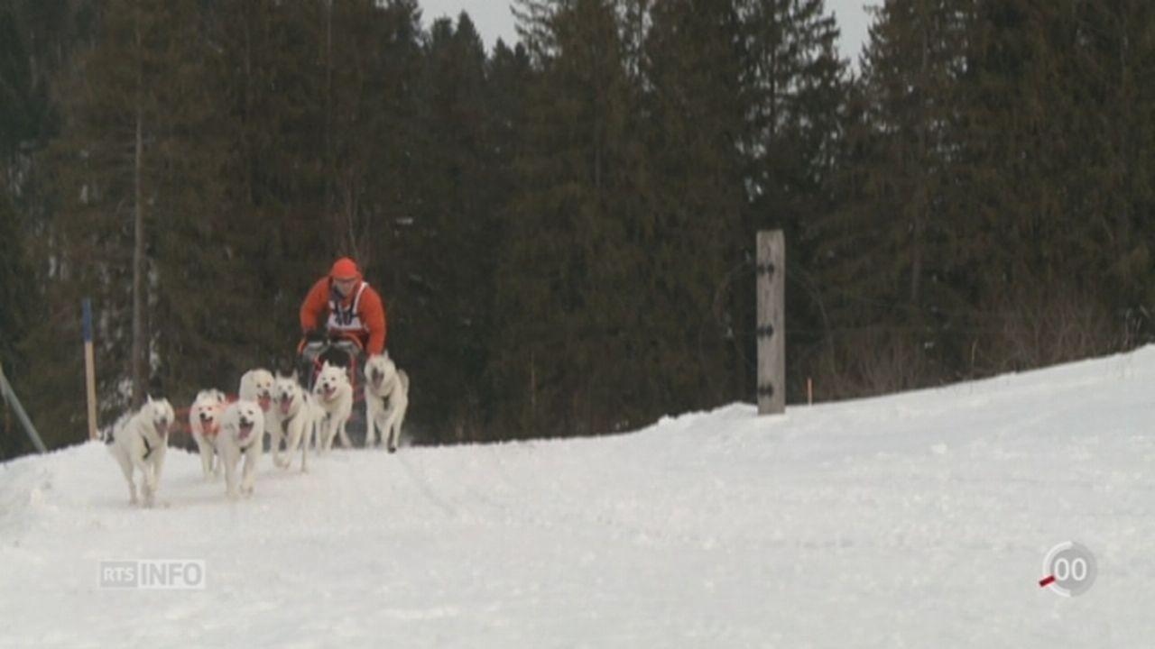 Les courses internationales de chiens de traîneau ont lieu dans les Franches-Montagnes [RTS]