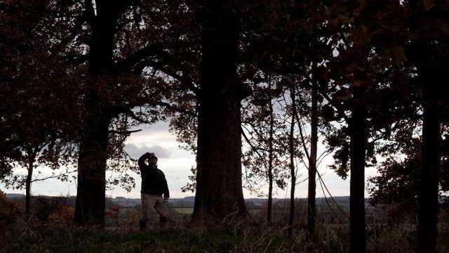 La chalarose, maladie fongique fragilise les frênes. [Lindsey Parnaby - AFP]