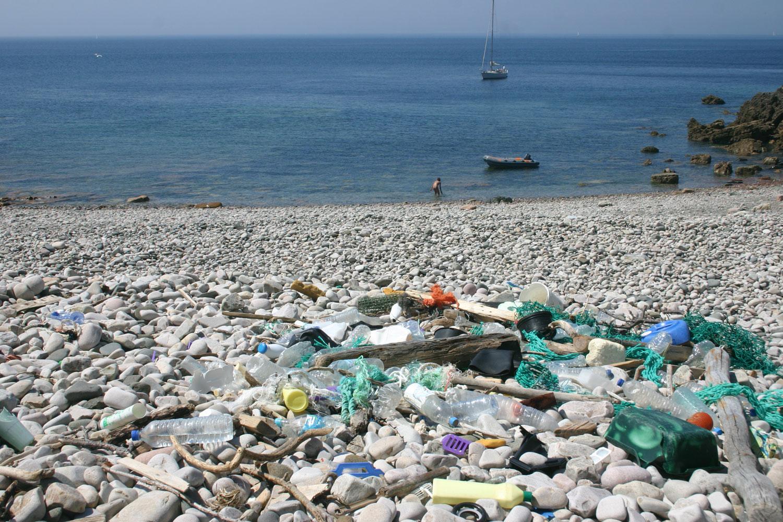 Découverte d'une larve mangeuse de plastique — Pollution