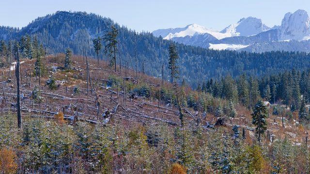 Dix ans après la tempête Lothar de 1999, cette forêt bernoise porte encore les traces des ravages subis. [Gaetan Bally - Keystone]