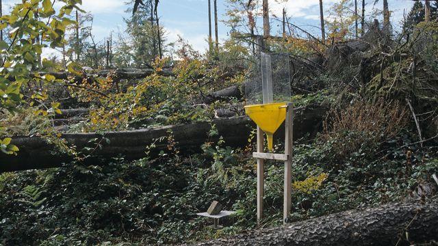 Les chercheurs ont suivi le développement des insectes sur des chablis consécutifs à la tempête Lothar, grâce à des pièges suspendus et au sol.  Beat Wermelinger WSL [Beat Wermelinger - WSL]