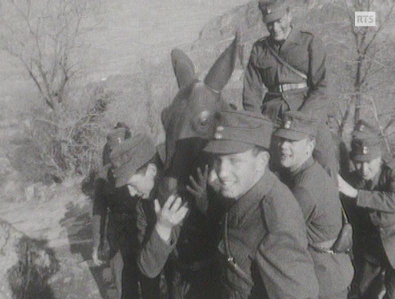 Le mulet de l'armée