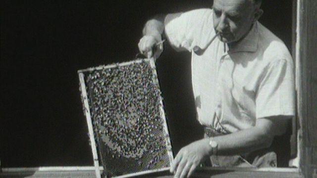 Les abeilles sont indispensables pour la pollinisation des fleurs des arbres. [RTS]