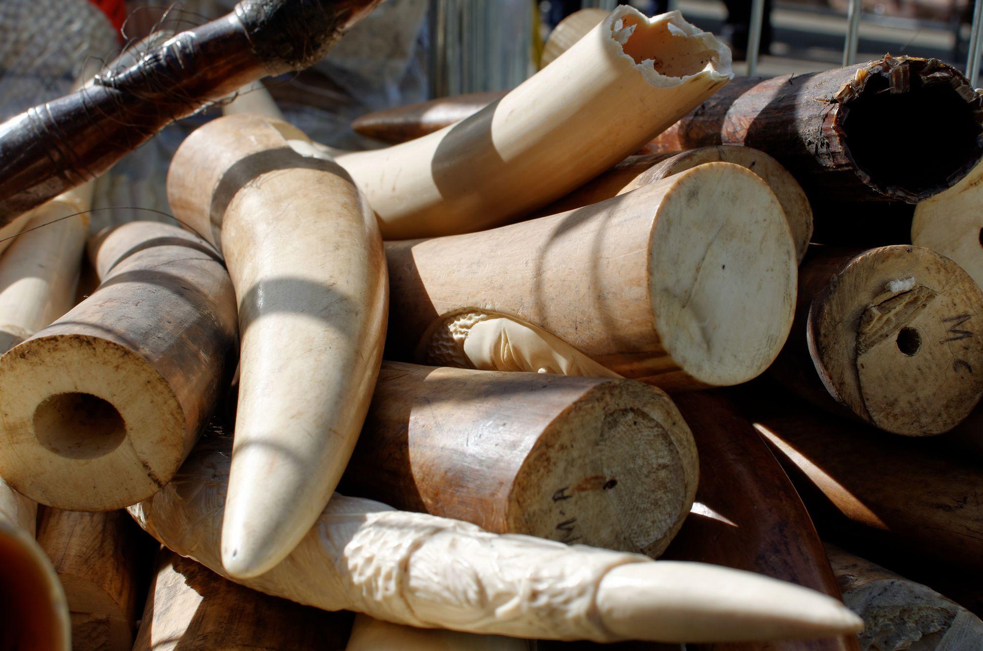 Premier importateur mondial la chine interdira la vente d - Comment reconnaitre de l ivoire ...