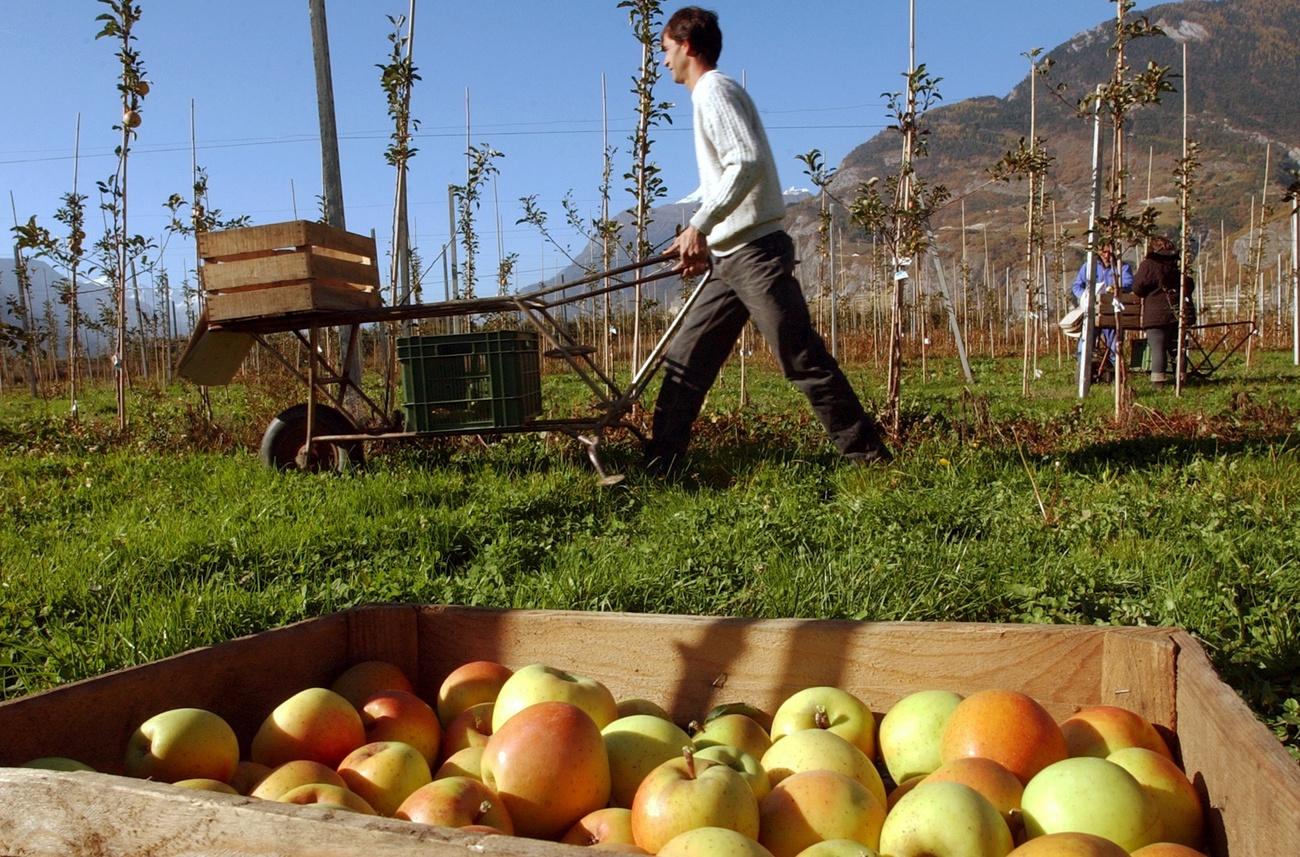 Les produits chimiques utilis s dans l 39 agriculture - Les produits menagers utilises dans le jardin ...