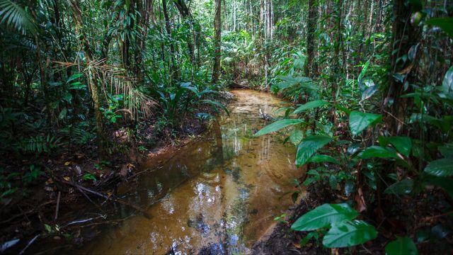 Avec 8715 espèces, le Brésil est le pays qui compte la plus grande variété d'arbres sur son territoire. [AFP]