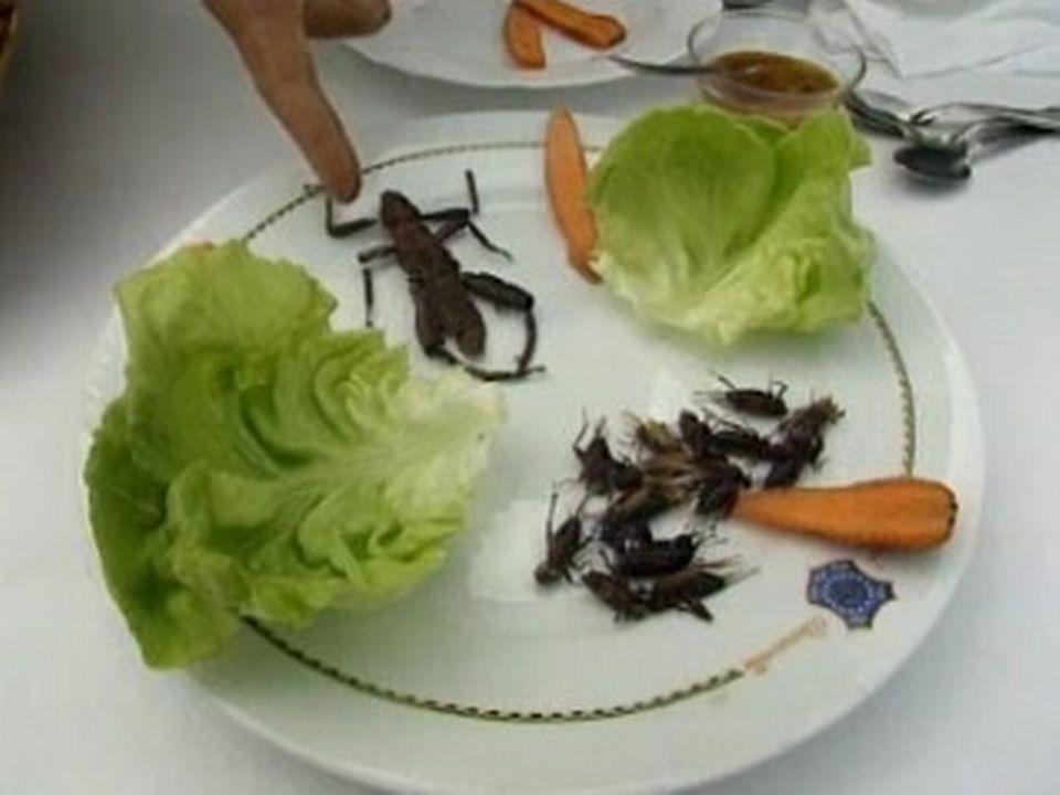 Des insectes dans nos assiettes [RTS]