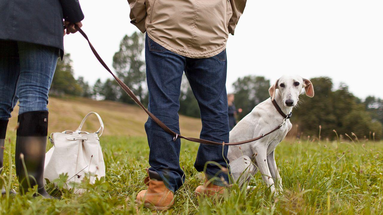 Les propriétaires doivent lâcher leurs chiens régulièrement, stipule la législation fédérale. [Gaëtan Bally - Keystone]