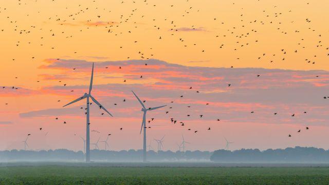 Des dizaines de milliers d'oiseaux tués chaque année par des éoliennes: faux. [Naj - Fotolia]