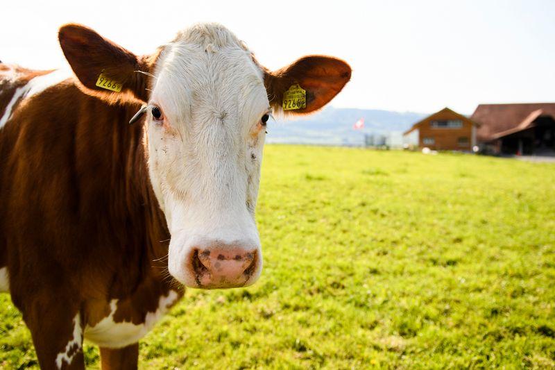 emploi agricole jura suisse