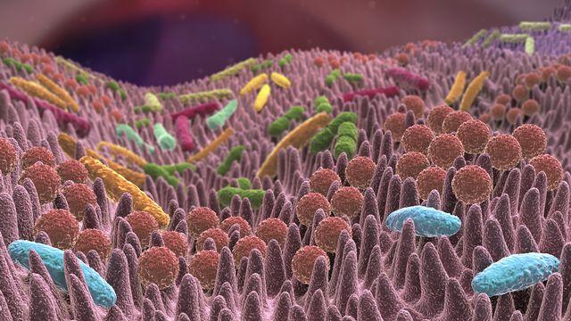 Le réchauffement climatique aurait un effet sur le microbiote. Alex Fotolia [Alex - Fotolia]