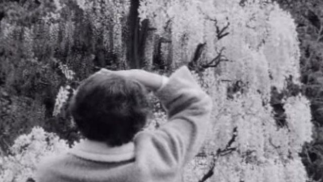 Visite au Jardin botanique en 1968. [RTS]