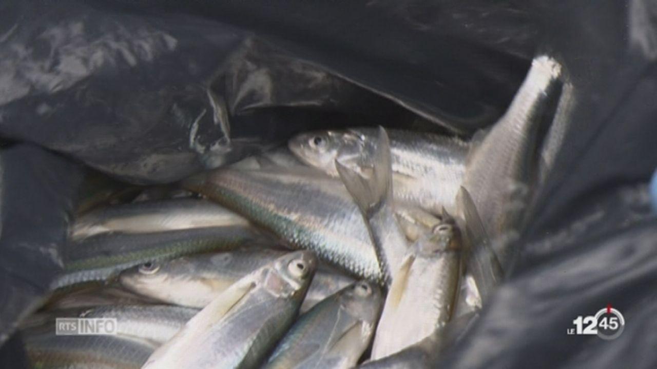 FR: la situation est préoccupante après la mort de milliers de poissons [RTS]