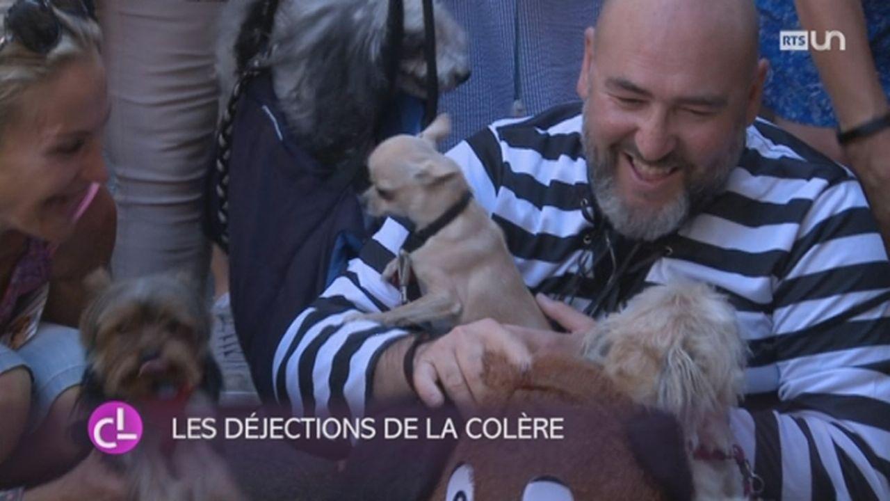 GE: les propriétaires de chiens protestent contre la loi sur les déjections canines [RTS]