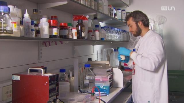 Les effets du glyphosate sur des rats de laboratoire [RTS]