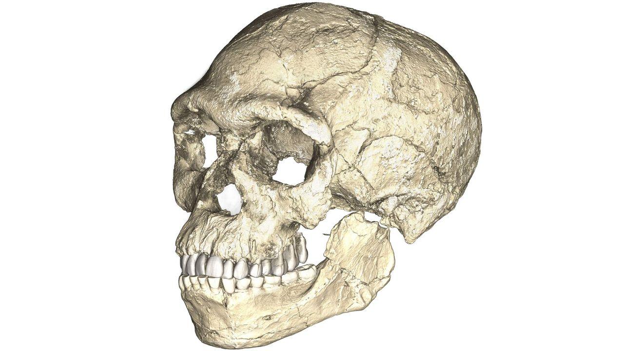 Une reconstruction du plus ancien Homo sapiens, découvert à Jebel Irhoud au Maroc. Philipp Gunz MPI EVA Leipzig [Philipp Gunz - MPI EVA Leipzig]