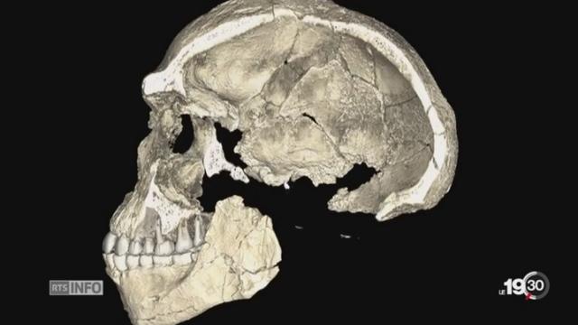 L'homo sapiens est bien plus vieux, il vivait il y a 300'000 ans [RTS]