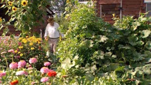 Un havre de verdure, un jardin familial en 2002. [RTS]