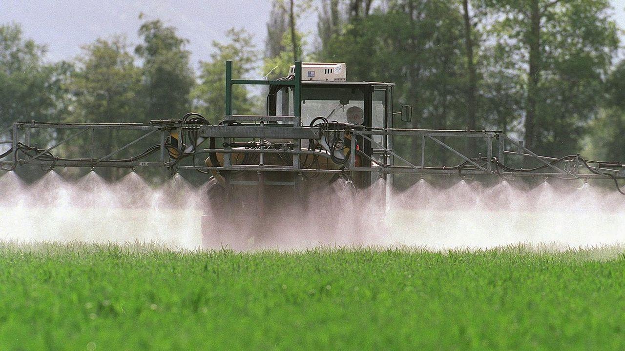 L'Union suisse des paysans veut oeuvrer afin d'utiliser des pesticides en moindre quantité et de manière ciblée. [Arno Balzarini - KEYSTONE]