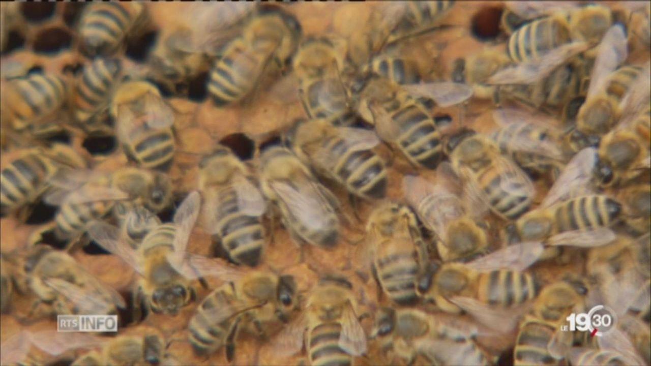 Les abeilles sont menacées par certains types d'insecticides [RTS]