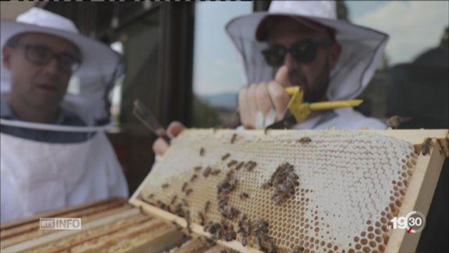 Des jeunes entrepreneurs veulent sauver les abeilles [RTS]