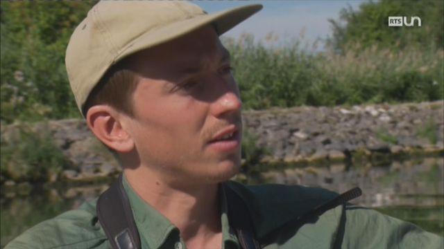 Entretien avec Julien Mazenauer, ornithologue, sur le canal de la Broye [RTS]