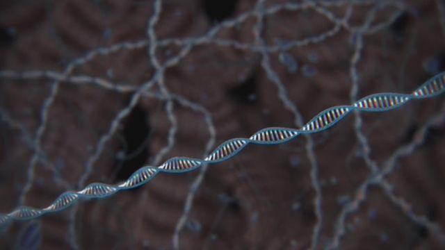 Science: stocker ses fichiers dans l'ADN d'êtres vivants [RTS]