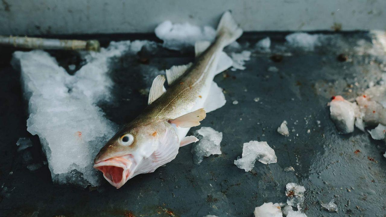 Les poissons de l'Arctique sont contaminés par le mercure. Ivan Kurmyshov Fotolia [Ivan Kurmyshov - Fotolia]