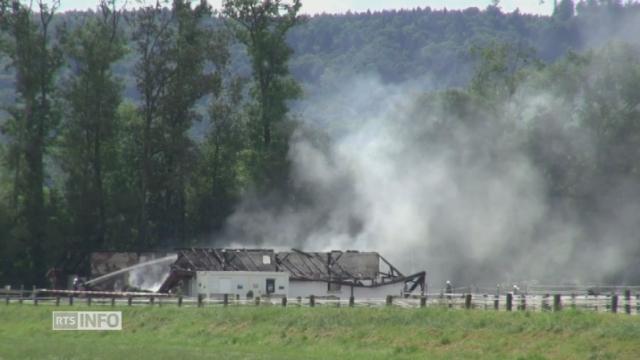 Une vingtaine de chevaux meurent dans un incendie