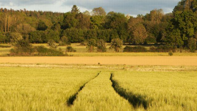 Un champ de blé [auryndrikson - Fotolia]