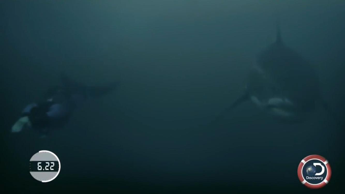 Michael Phelps perd son duel contre un requin