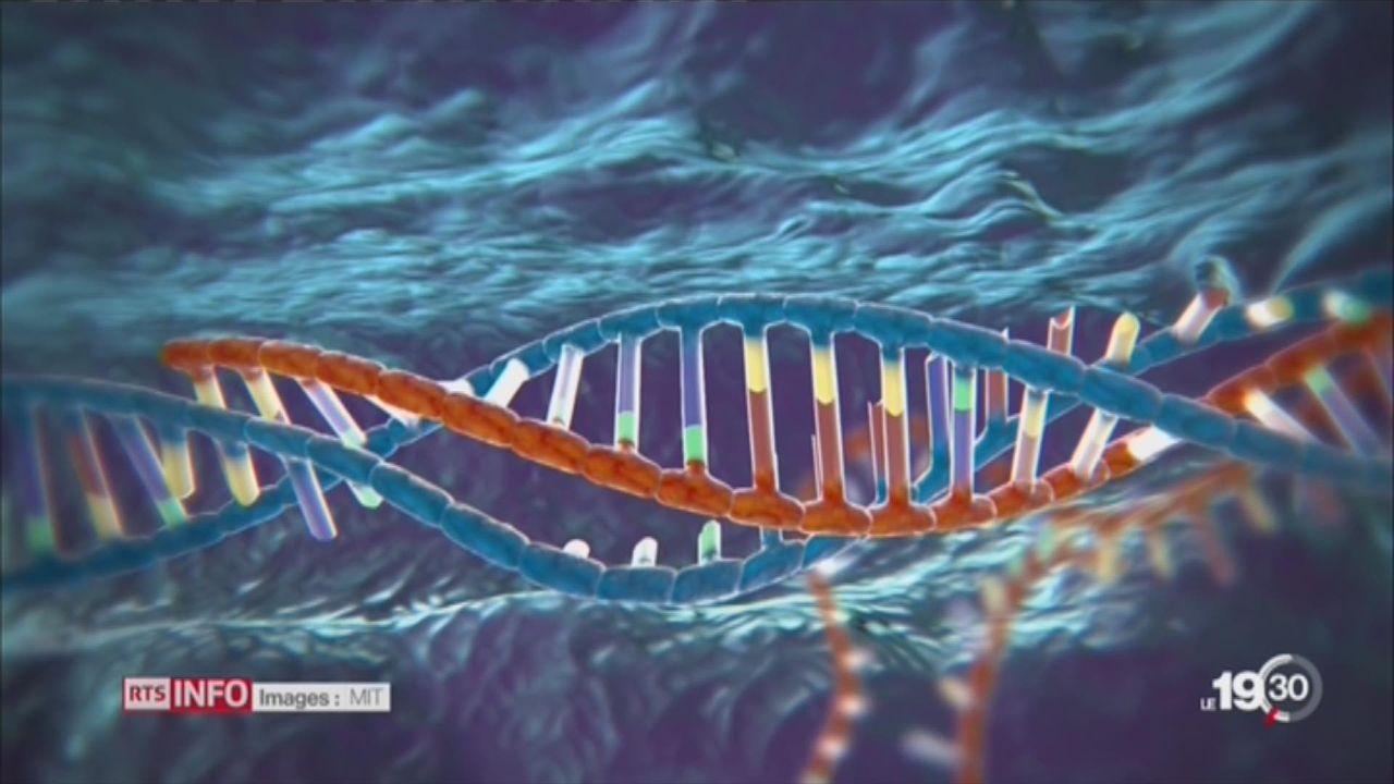 Génétique: modifier le coeur d'un embryon est possible [RTS]