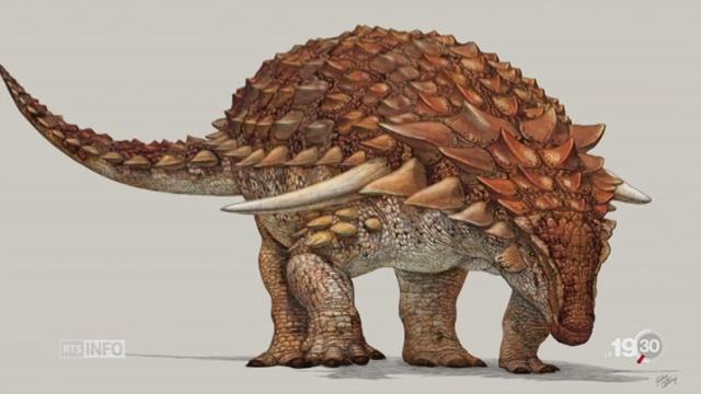 Paléontologie: la découverte du nodosaure est exceptionnelle [RTS]