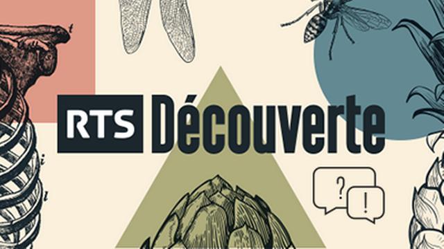 RTS Découverte - illustration Questions-Réponses