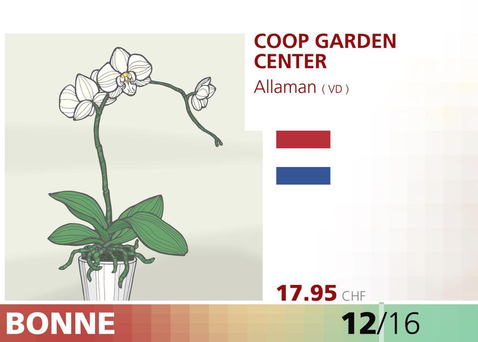 ABE WEB orchidee 00008
