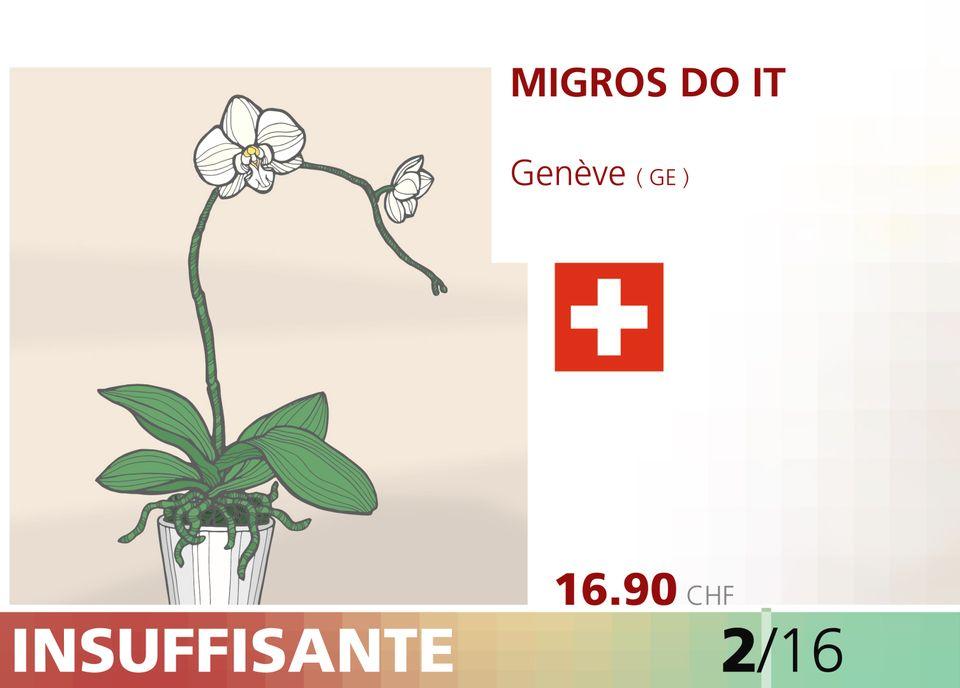 ABE WEB orchidee 00009