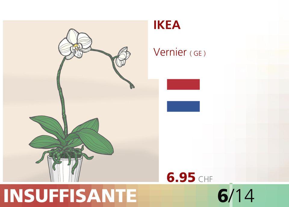 ABE WEB orchidee 00011