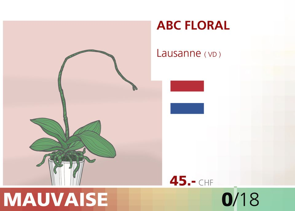 ABE WEB orchidee 00014