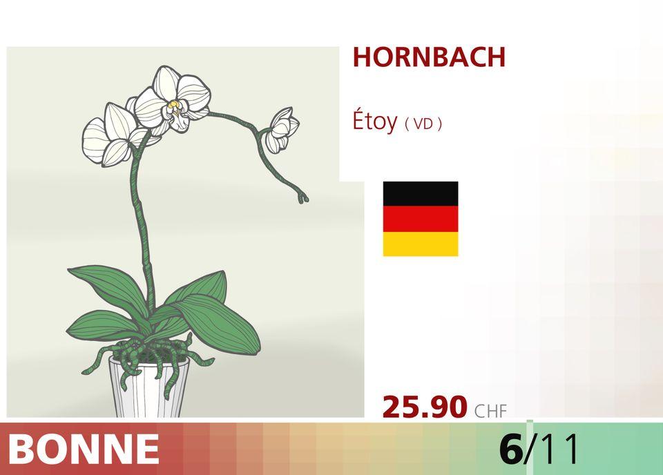 ABE WEB orchidee 00007