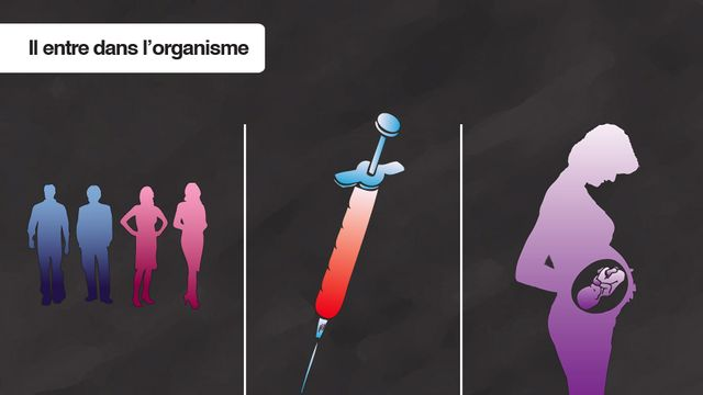 Le virus du SIDA (VIH) est un rétrovirus ce qui veut dire que c'est un virus qui n'a pas d'ADN mais un ARN (acide ribonucléique). Il entre par les muqueuses et s'attaque au système immunitaire. La contamination peut se faire par voie sexuelle, par voie sanguine ou de la mère à l'enfant (fœtus).