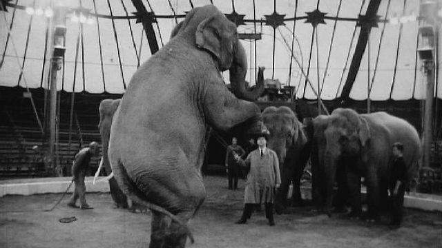 Rolf Knie, l'homme qui faisait danser les éléphants, 1962. [RTS]