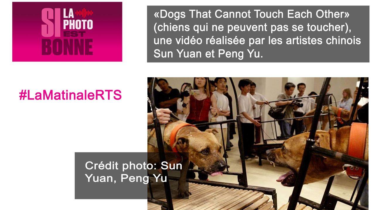 """La vidéo """"Dogs That Cannot Touch Each Other"""" des artistes chinois Sun Yuan et Peng Yu a dû être retirée par la Fondation Guggenheim de New-York. [Sun Yuan et Peng Yu]"""