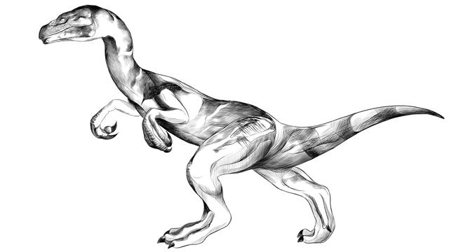 Vignette Raptor 16x9 [Серафима Манекина - Fotolia]