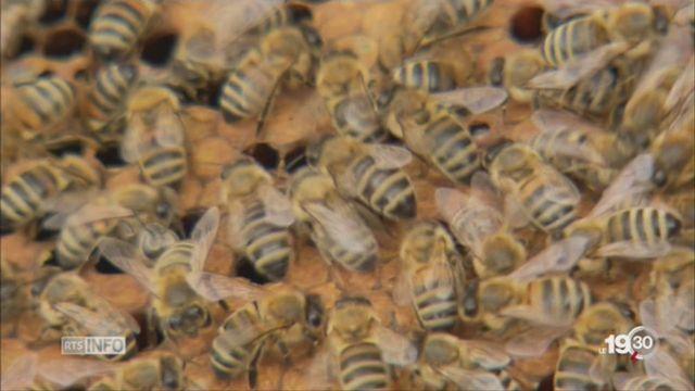 Trois quarts des miels contiennent des néonicotinoïdes [RTS]